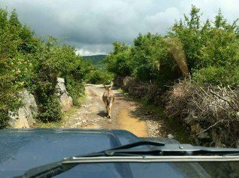 Piste auf dem Weg ins Vermoshtal, Albanien