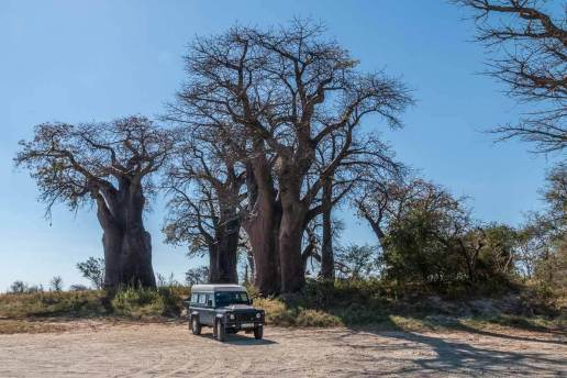 Unser Land Rover vor den Baines Baobabs