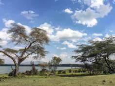 Zebras auf Crescent Island am Lake Naivasha