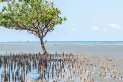 Mangroven an der Küste Tansanias