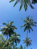 Kenias Küste - Unter Palmen, Kenia