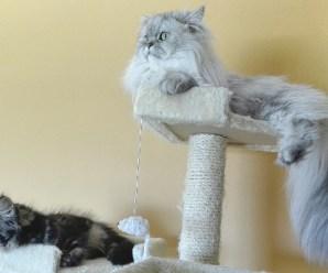 Costruire un tiragraffi gatto in modo semplice