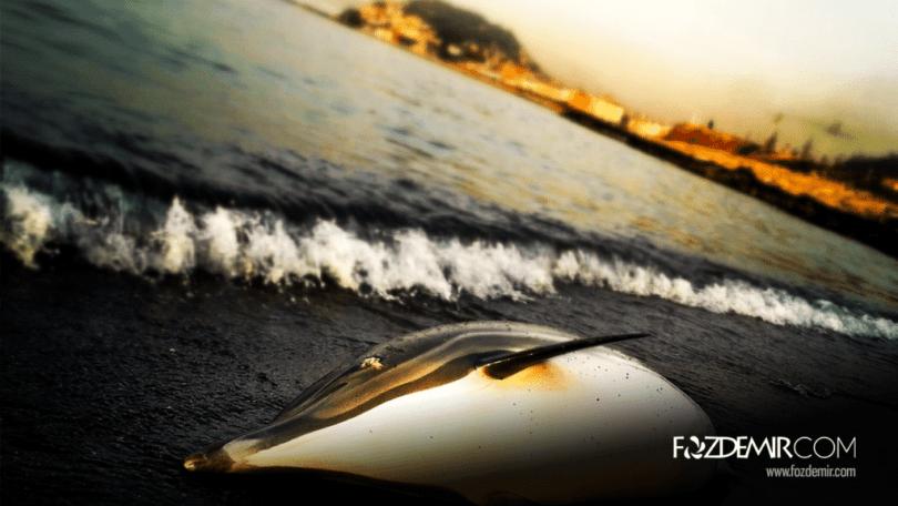 Giresun Sahili ve Yunus Balığı