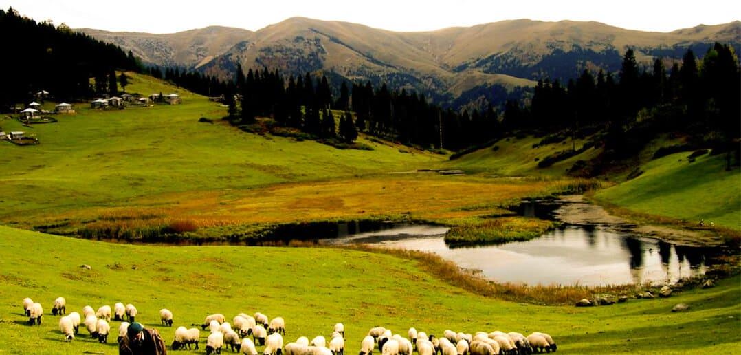 Giresun'un saklı cenneti Yağlıdere Gölyanı Yaylası