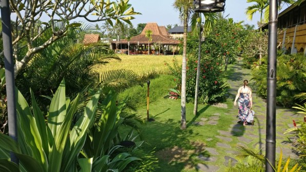 Bali Honeymoon Alaya Ubud paddy field