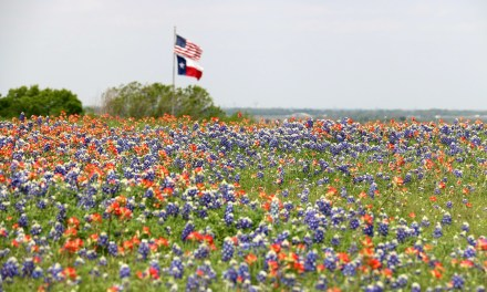 10 Fun Things To Do In Texas This Spring