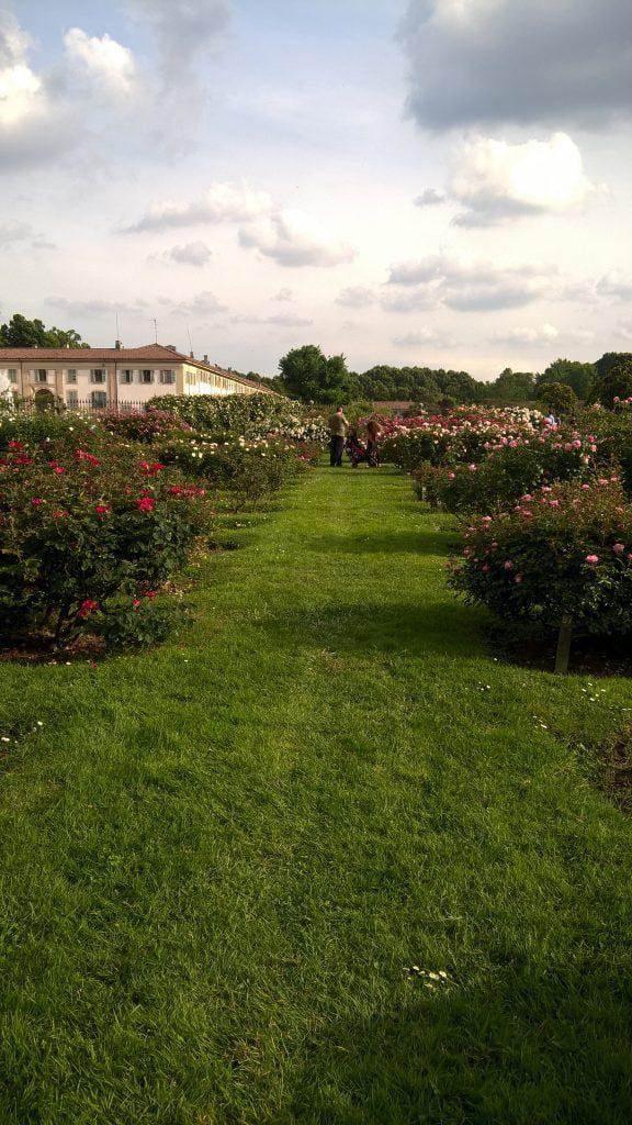Roseto 'Niso Fumagalli' botanical garden