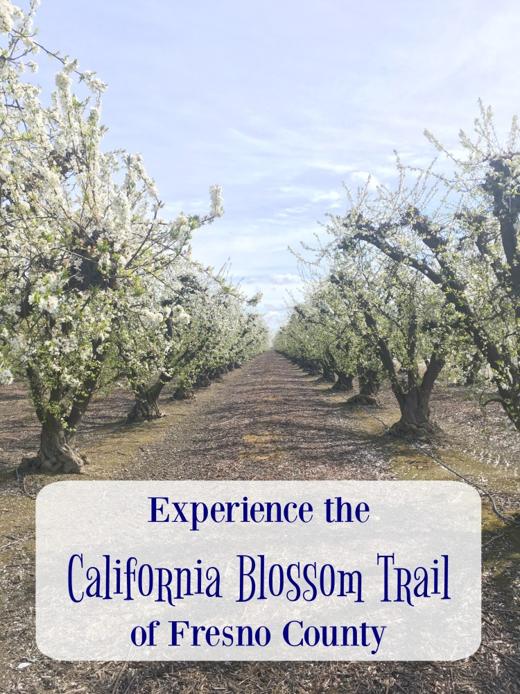 things to do in California, things to do in California bucket lists, California travel, things to do in California beautiful places, things to do in California with kids, California blossom trail, Fresno County blossom trail, things to do in Fresno County, cherry blossom California