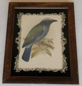 Temminks Roller byJ. G. Keulemans bird print in a reverse painted frame