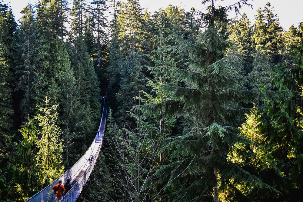 Capilano Suspension bridge disappearing into the tree tops at north vancouver