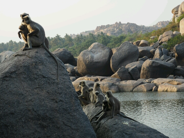 Monkeys perched on rocks in Hampi, India