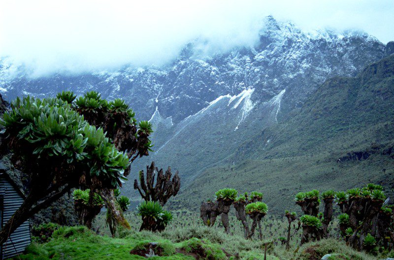 green trees atop mountainous landscape