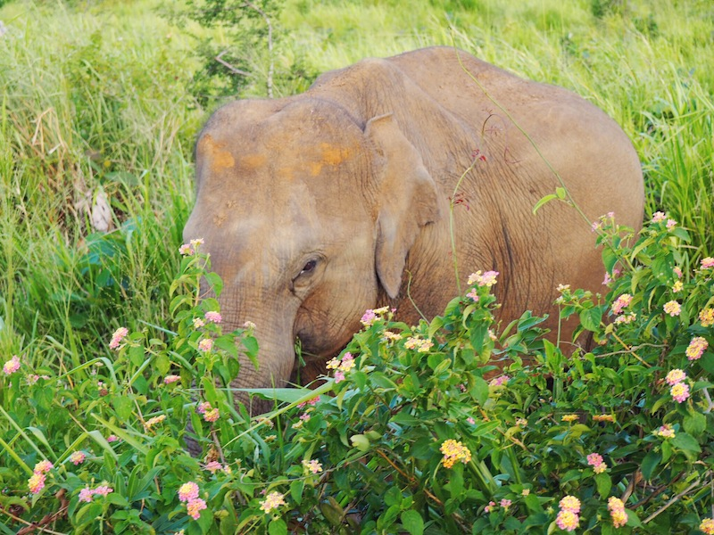 Isn't she lovely? Spotted on elephant safari in Sri Lanka