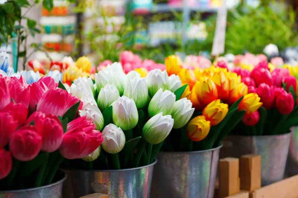 The beautiful tulips you'll find at Amsterdam's many flower markets.
