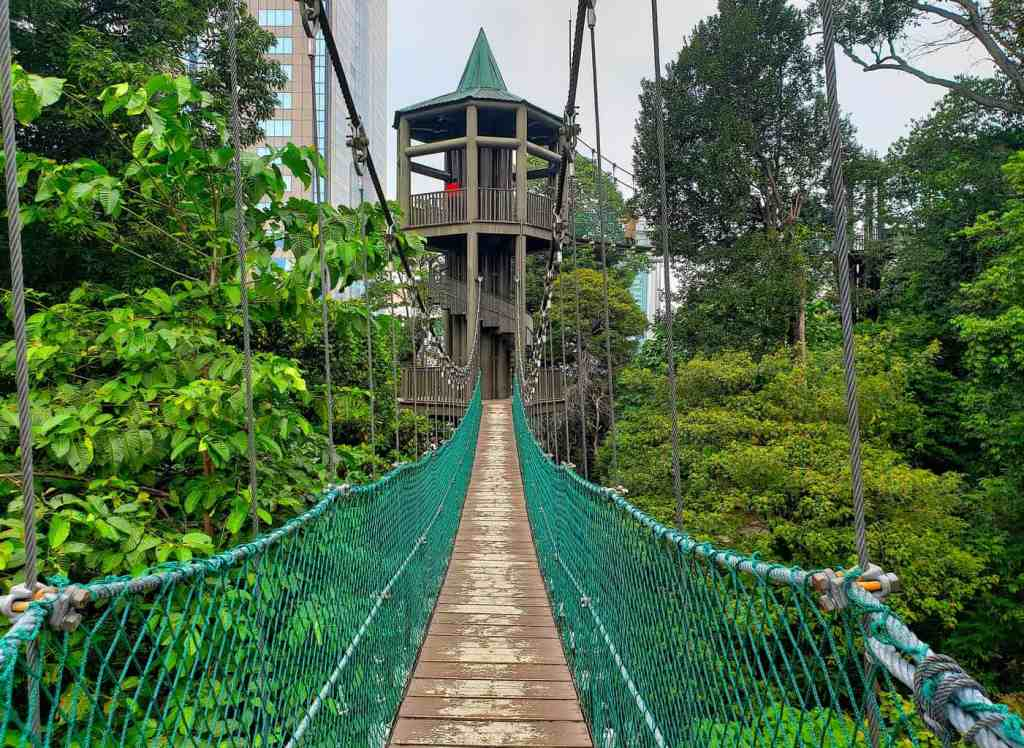 The beautiful canopy walk that you'll find within the KL Forest Eco Park.
