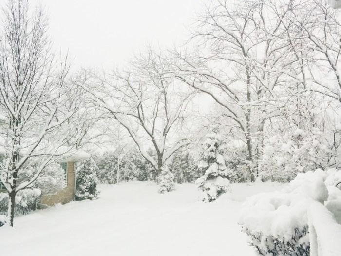 Fresh Snow Fall