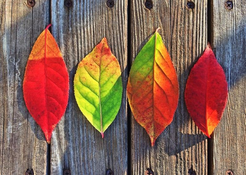 One Leaf Many Sides