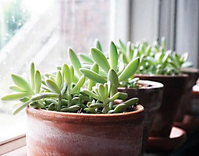 Plants on the Windowsil