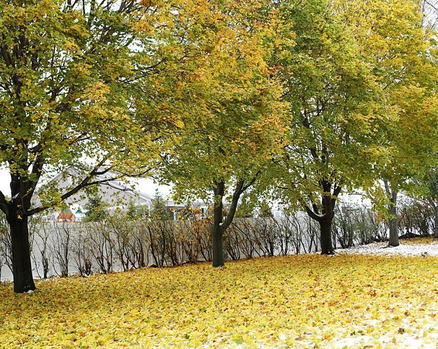 Autumn Leaves Fall Trees