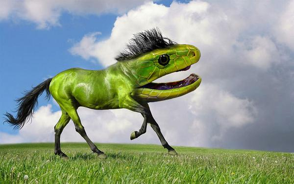 23 Crazy and Bizare Animal Mash-ups - Design Mash