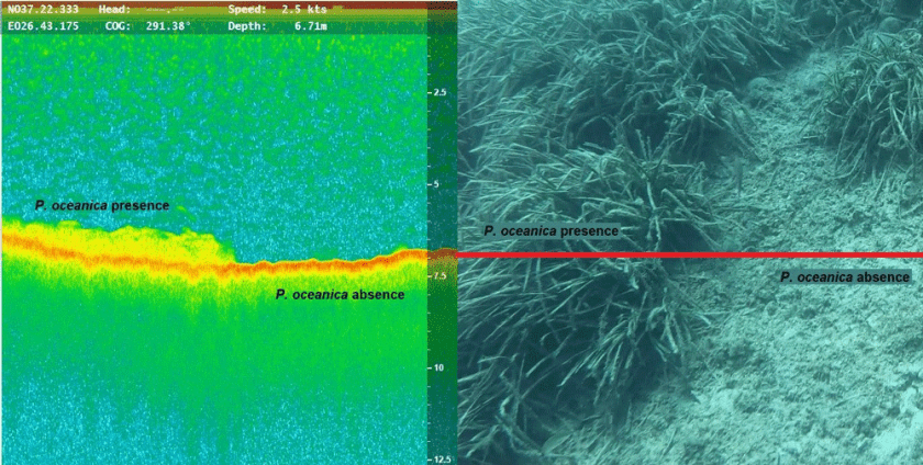 Pixels are classified to indicate P. oceanica presence or absence.
