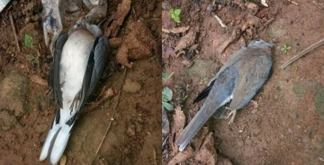 ''Two birds fought to death in my compound early this morning'' - Nigerian man says