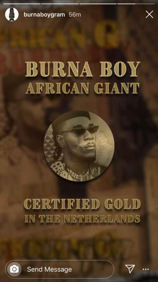 African Giant Gold In Netherlands