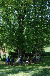 Meditatie onder de kastanjeboom