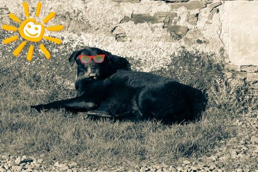 Neo-sieste-soleil
