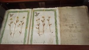 erbario-orto-botanico