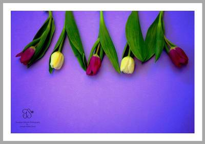 Tulips day