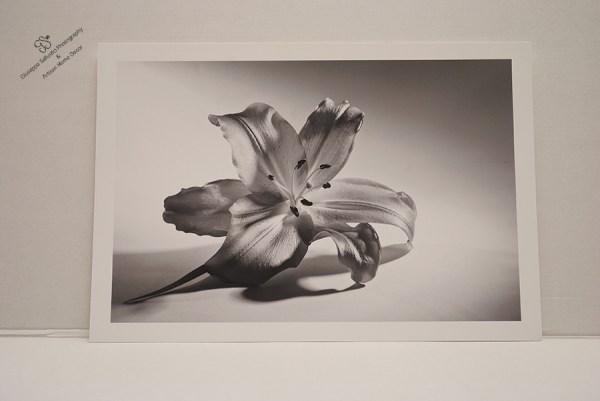 silk petals