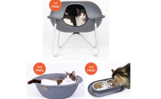 Floppy Cats Hepper Modern Pet January 2019 Giveaway