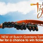 ClickOrlando Tigris Official Contest