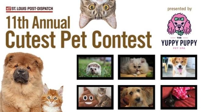 St. Louis Post-Dispatch 11th Annual Cutest Pets Contest