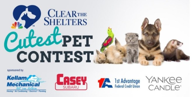 Clear The Shelters Cutest Pet Contest