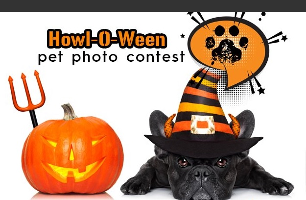 KJ97 Howl-O-Ween Pet Photo Contest