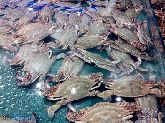 zopo zp900 leader camera test photos crabs