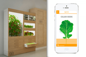 Grove-Labs-contenedor-app