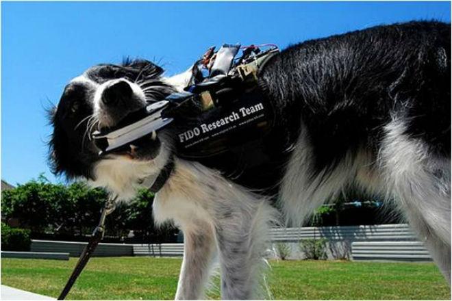 Wearable canino: Chaleco tecnológico que permite hablar a los perros