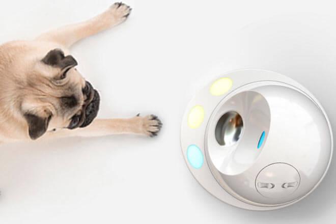 #CES2016: Con esta consola tu perro no se aburrirá en casa (CleverPet)