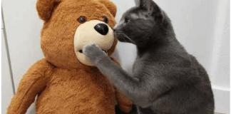 Este adorable oso de peluche actúa como tu asistente inteligente