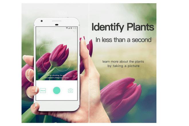 Conoce Picture This, la app para reconocer plantas
