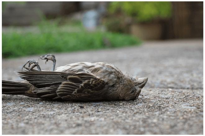 foto de un ave muerta en el piso