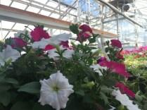 news-plant-sale-3
