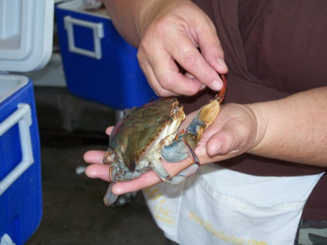 features-Soft-shell_crab_in_hand