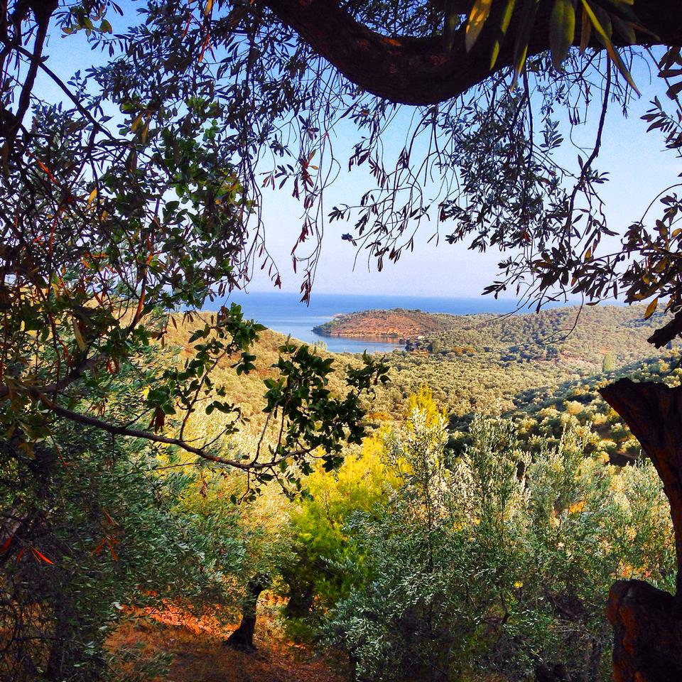 The view of the Aegean from our WWOOF farm on Lesvos, Greece