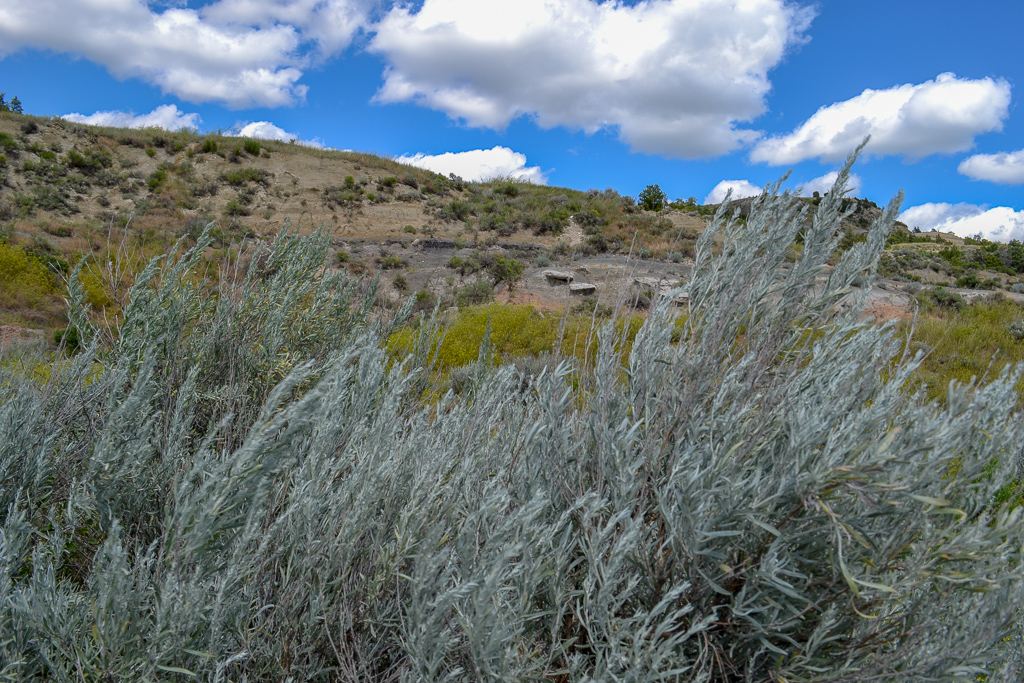 Sage brush in the North Dakota Badlands