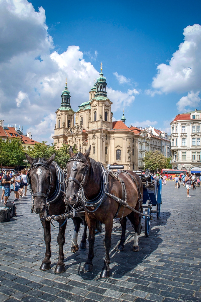 Horses in front of St Nicholas Church in Prague Old Town Square