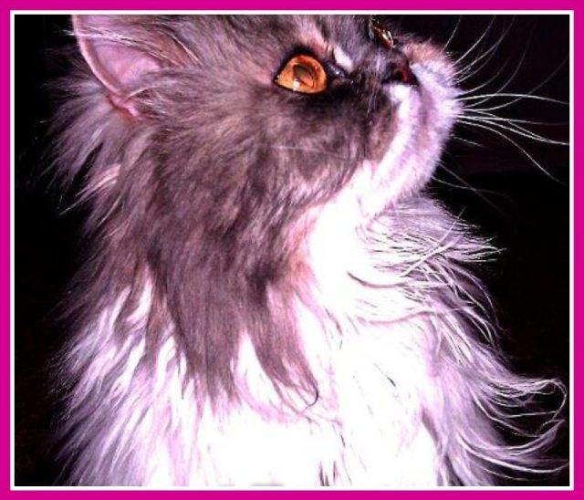 Minka Kitty